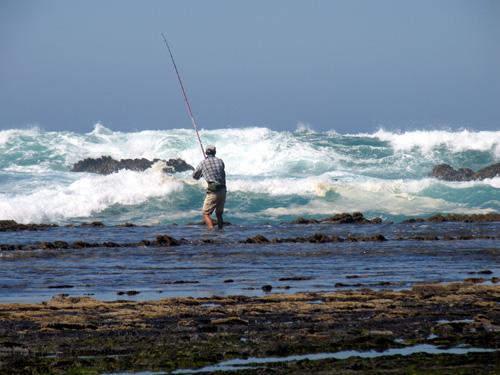 Pesca aos Sargos