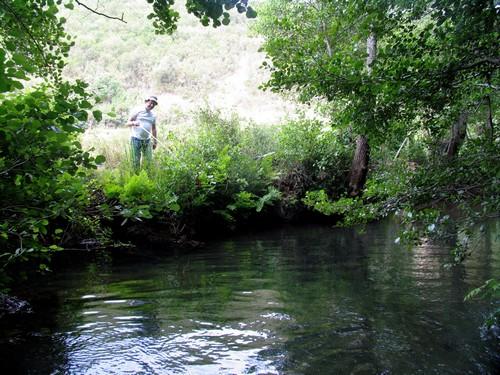 Pesca ao bordalo