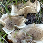 Cogumelos5